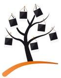 fotografii ramowy drzewo Fotografia Stock
