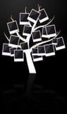 fotografii ramowy drzewo Obrazy Royalty Free