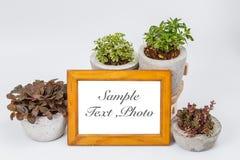 Fotografii ramy rośliny w kwiatów garnkach Zdjęcia Royalty Free