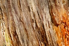 Fotografii stara drzewna tekstura makro- Zdjęcie Stock