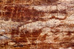 Fotografii stara drzewna tekstura makro- Obraz Royalty Free