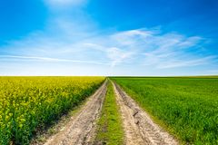 Fotografii wiosny krajobraz z polami oilseed gwałt w kwiacie pod niebieskim niebem zdjęcie stock