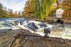 Fotografilandskap för att hoppa havsforeller på den Morrum floden Royaltyfri Bild