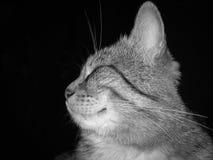 Fotografisk bild av en tämjd katt i profilnärbild i svartvita signaler på en svart bakgrund Royaltyfri Foto