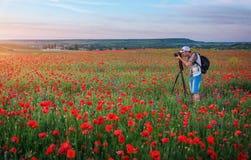 Fotografo che prende le immagini dei papaveri nel campo Immagine Stock