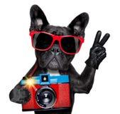 Fotografo del cane Fotografie Stock Libere da Diritti