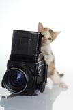 Fotografo del gattino Immagine Stock