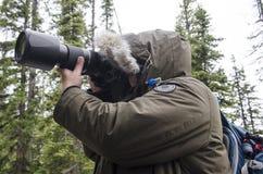 Fotografo della fauna selvatica nel parco nazionale di Yellowstone Immagini Stock