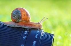 Fotografo della lumaca Fotografie Stock Libere da Diritti
