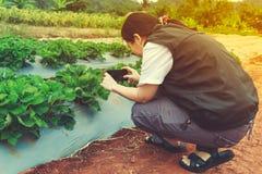 Fotografo femminile asiatico che prende a foto la frutta organica della fragola Fotografia Stock Libera da Diritti