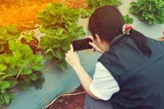 Fotografo femminile asiatico che prende a foto la frutta organica della fragola Fotografie Stock Libere da Diritti