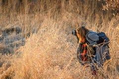 Fotografo femminile della natura che prende foto di erba alta nel sunligh Fotografie Stock