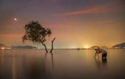 Fotografo Tak un albero vivo solo della foto Fotografia Stock Libera da Diritti