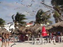Fotografować Seagulls Obraz Stock
