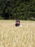 Fotographer in corn field Stock Photography