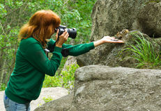 Fotographer wildlife chipmunk Royalty Free Stock Photography