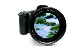 Fotographia della natura Fotografie Stock