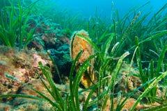 Fotographia subacquea Fotografia Stock Libera da Diritti