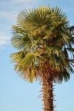 Fotographie eingelassene Mittelmeerinsel Korsika Stockbild