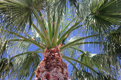 Fotographie eingelassene Mittelmeerinsel Korsika Stockfoto