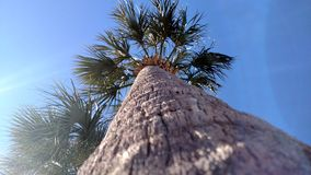 Fotographie eingelassene Mittelmeerinsel Korsika Lizenzfreie Stockbilder