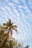 Fotographie eingelassene Mittelmeerinsel Korsika Lizenzfreies Stockbild
