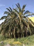 Fotographie eingelassene Mittelmeerinsel Korsika Stockfotografie