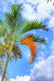 Fotographie eingelassene Mittelmeerinsel Korsika Lizenzfreies Stockfoto