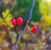 Fotoheupen in het bos Royalty-vrije Stock Fotografie