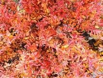 Fotohintergrund von rot-orange Blättern des Herbstes lizenzfreie stockfotos