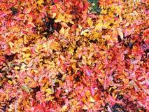 Fotohintergrund von rot-orange Blättern des Herbstes stockbild