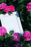 Fotokader Roze Rose Summer Garden royalty-vrije stock foto