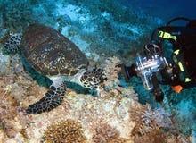 Fotomodel subaquático foto de stock royalty free