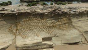 Fotomontage eines großen Fantasiefisches versteinert auf den Schichten, die auf einem Stein sich bilden stockfotografie