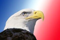 Fotomontering: Amerikaanse kale adelaar stock foto