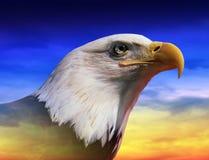 Fotomontering: Amerikaanse kale adelaar bij zonsopgang stock foto's