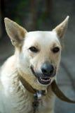 Fotoporträt eines Hundes Lizenzfreie Stockbilder
