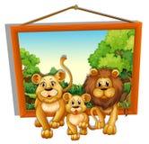Fotoram av lejonfamiljen Royaltyfria Bilder