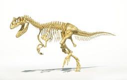 Fotorrealista esquelético del Allosaurus, científico correcto. stock de ilustración