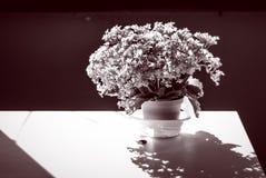 fotosíntesis Imágenes de archivo libres de regalías
