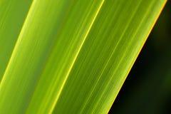 Fotos abstractas verdes frescas del lino de la naturaleza Imagen de archivo