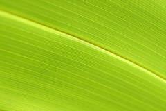 Fotos abstractas verdes frescas del lino de la naturaleza Imagenes de archivo