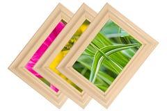 Fotos da natureza Imagens de Stock