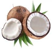 Fotos de alta calidad de cocos. imagen de archivo libre de regalías