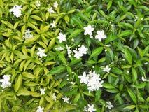 Fotos de flores en el fondo del plan verde, el centro de las zonas tropicales fotografía de archivo libre de regalías
