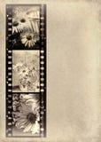 Fotos de la margarita en tira de la película stock de ilustración