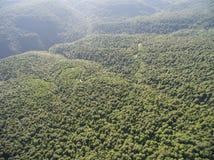 Fotos de la vista panorámica Camino en un bosque de la montaña Foto de archivo