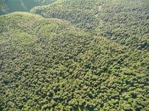 Fotos de la vista panorámica Camino en un bosque de la montaña Foto de archivo libre de regalías