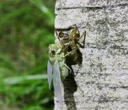 Fotos de los insectos que mudan en rocas Foto de archivo