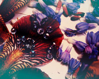 Fotos de los pétalos de la flor, gotas, joyería, pulsera, Fotografía de archivo libre de regalías